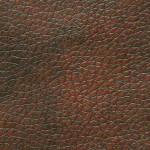 Chestnut-150x150